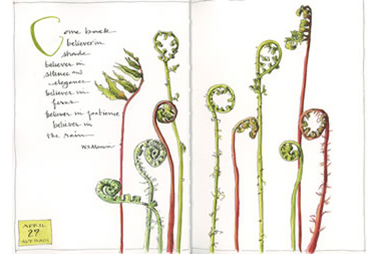 Beta Series Sketchbook Gallery